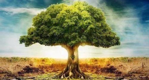 香柏树的第三个99公益日