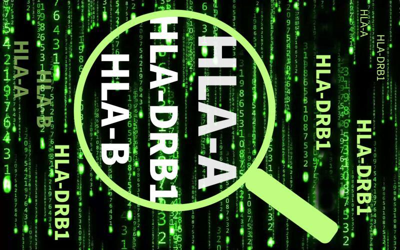 HLA配型初次检索