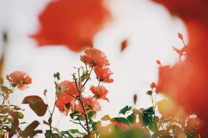【056期正文】跨越逆境向阳而生--肿瘤患者创伤后自我成长